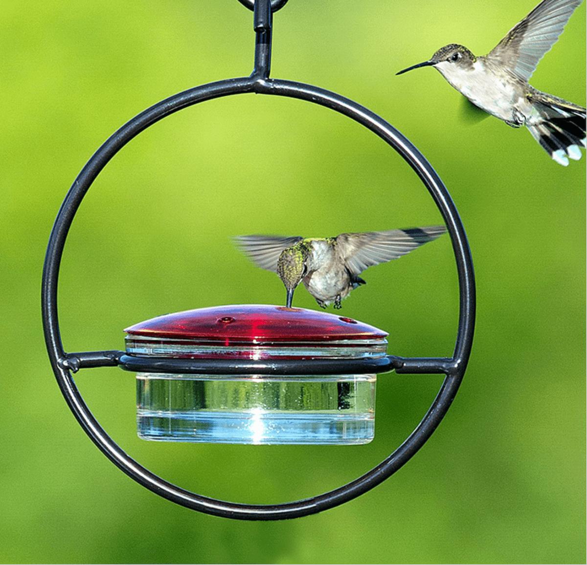 sphere hummingbird feeder