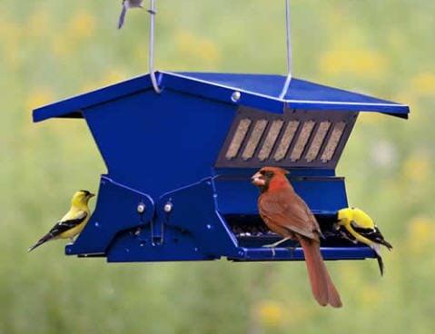 Squirrel-Proof Bird Feeders Blue