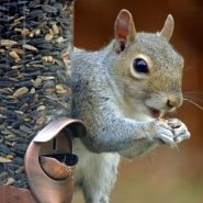 12 Tips for Squirrel-Proof Bird Feeders, and 5 Feeders That Work