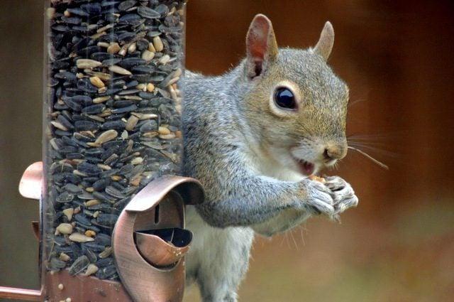 Squirrel Sunflower Seed Feeder Smile Marion Mersch