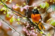45 Best Spring Bird Photos Ever