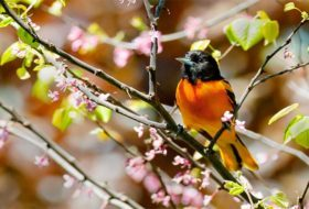 45 Best Spring Bird Photos Ever