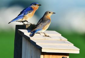 Get Started with Birdhouses