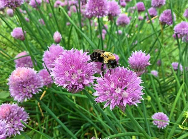 Chives grow well in shade.