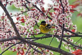 Migratory Birds Hotspots for Spring