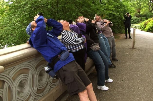 Central Park Music Box Films Migratory Birds Hotspots