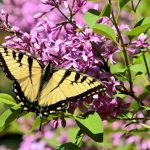 12 Flowering Shrubs That Attract Butterflies
