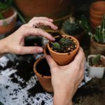 8 Gardening Subscription Boxes You'll Love to Unbox