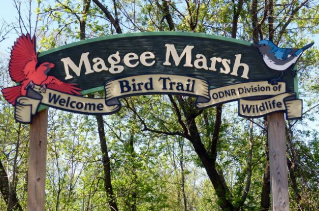 Judy Roberts Magee Marsh Migratory Birds