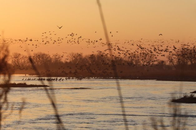 Rowe Sanctuary WolfmanSF Creative Commons Migratory Birds