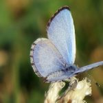 Attracting the First Spring Butterflies