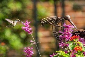 Caption This! Hummingbird Double