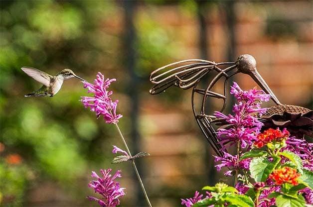 hummingbird with hummingbird statue