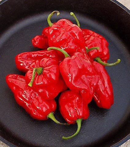 Roulette habanero pepper