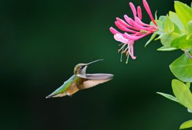 Top 10 Colorful Flowers Hummingbirds Love