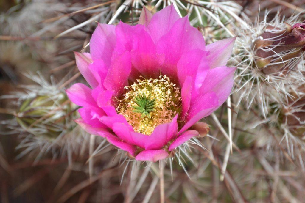 California Desert not far from Joshua Tree National Park