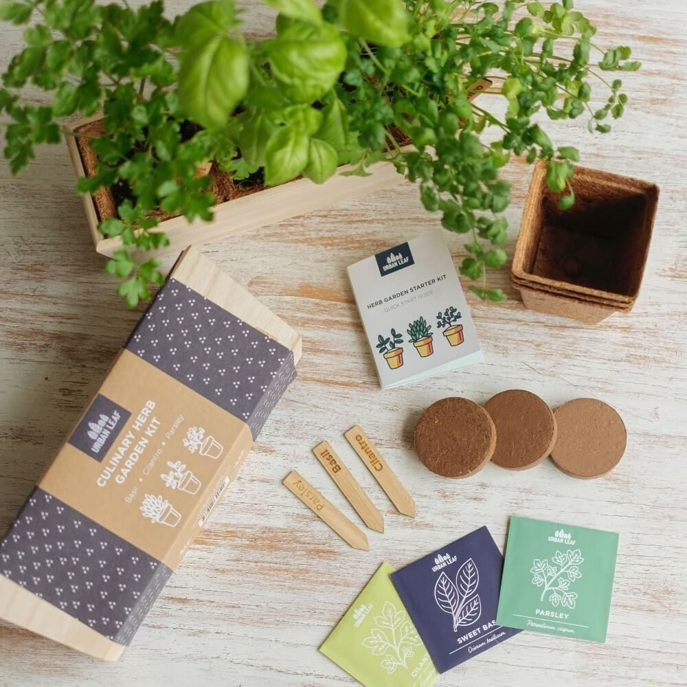 Herb garden trio kit