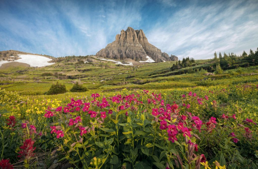 Flowers and mountain, glacier national park