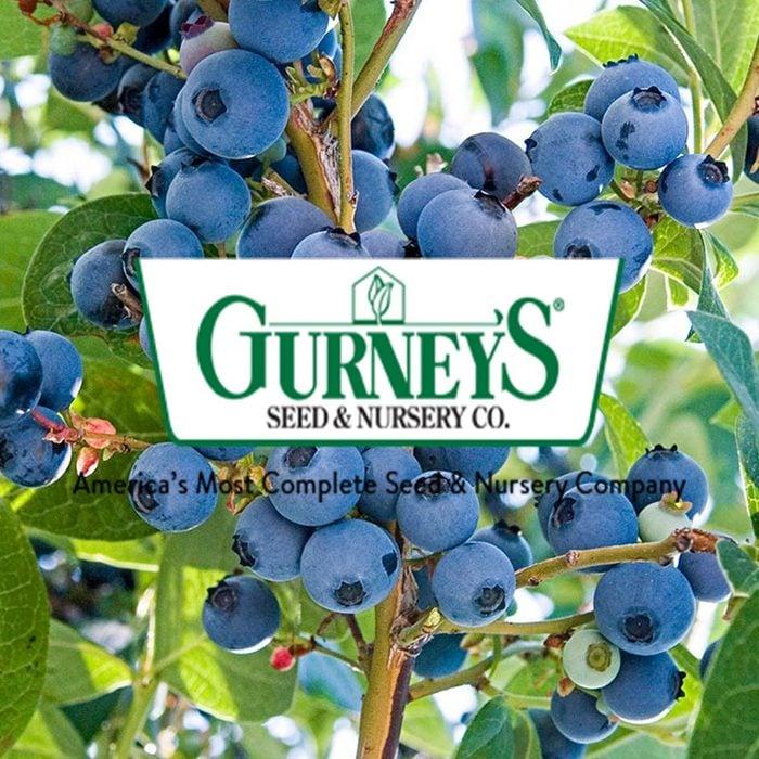 gurneys