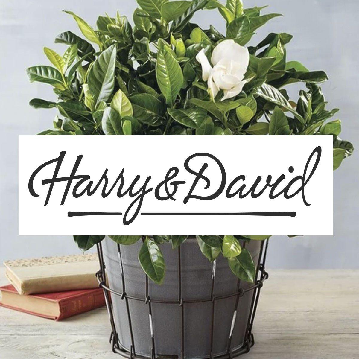harry and david