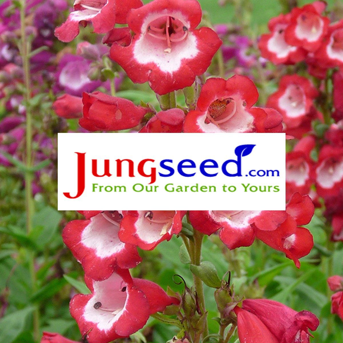 jungseed