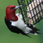 5 Ideas to Feed and Attract Spring Birds