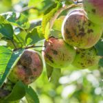 Top 10 Tree Diseases (And What to Do About Them)