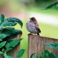 13 Super Cute Photos of Baby Birds You Need to See