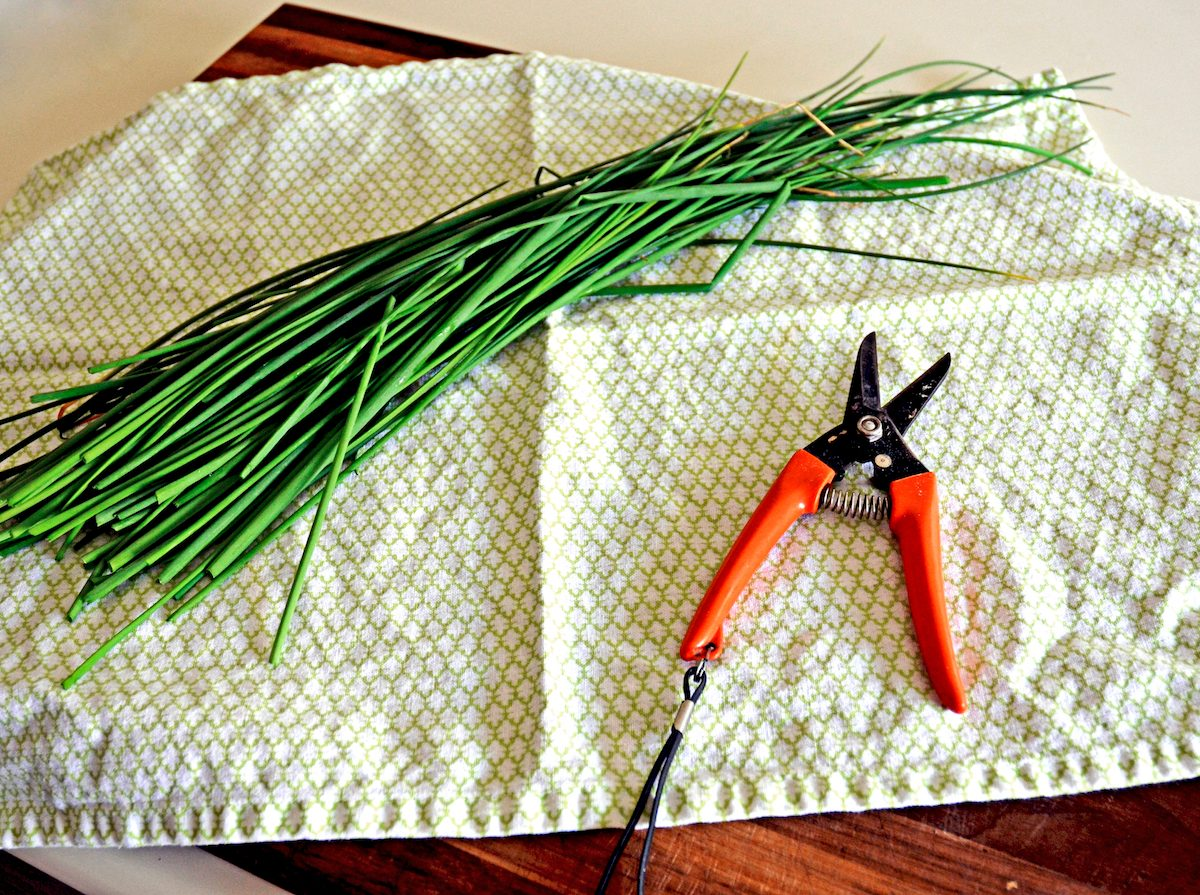 Freshly cut chives sitting on a kitchen towel.