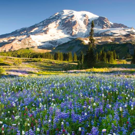35 National Parks You Can Tour Online Right Now