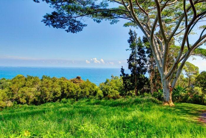 tropical garden . Garden Of Eden, Maui Hawaii