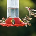 How to Clean Hummingbird Feeders