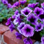 Top 10 Purple Flowers That Attract Hummingbirds