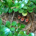 What is a Fledgling? Learn the Five Stages of a Baby Bird's Life