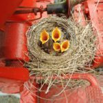 How to Safely Observe Nesting Birds
