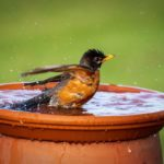 How to Repair a Cracked Birdbath