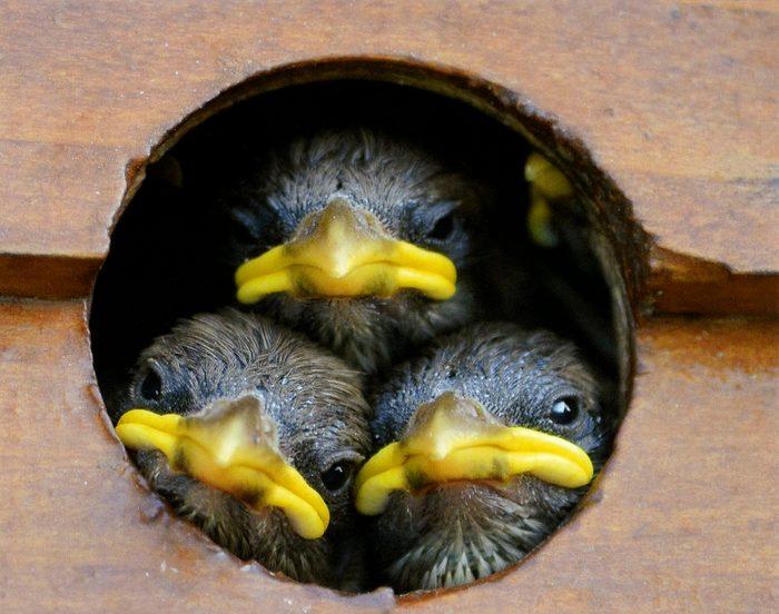 cute baby birds in birdhouse