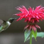 Top 15 Colorful Flowers Hummingbirds Like