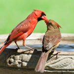 How to Clean a Birdbath