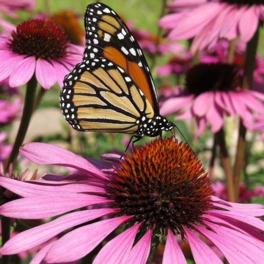 Annuals vs. Perennials — What is the Difference?