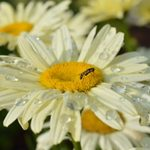 10 Ways to Conserve Water in the Garden