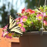 6 Tips for Watering Container Gardens
