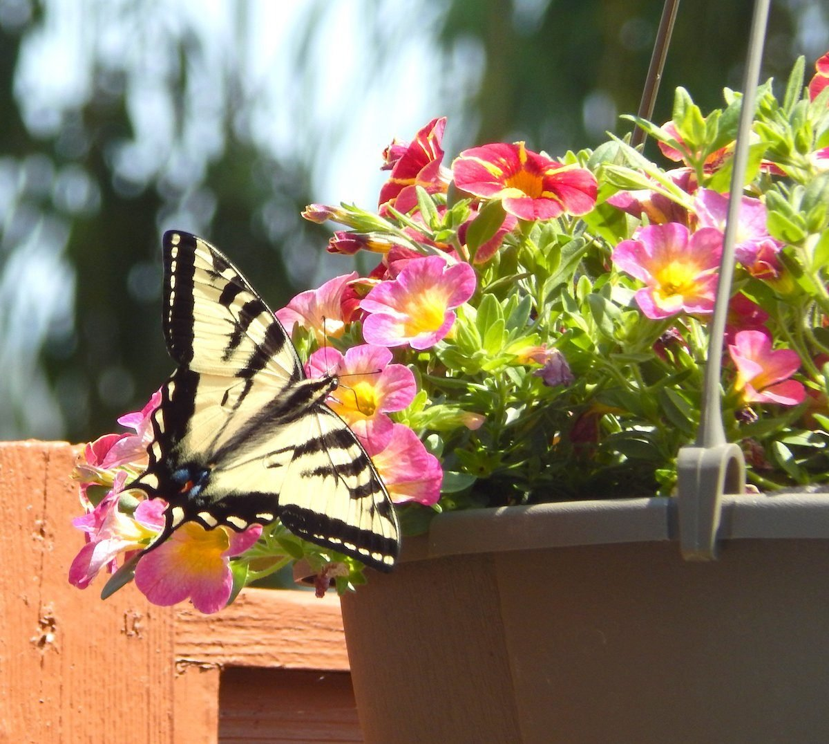 Hanging basket and butterfly