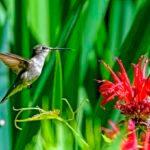15 Photos That Prove Hummingbirds Are Amazing