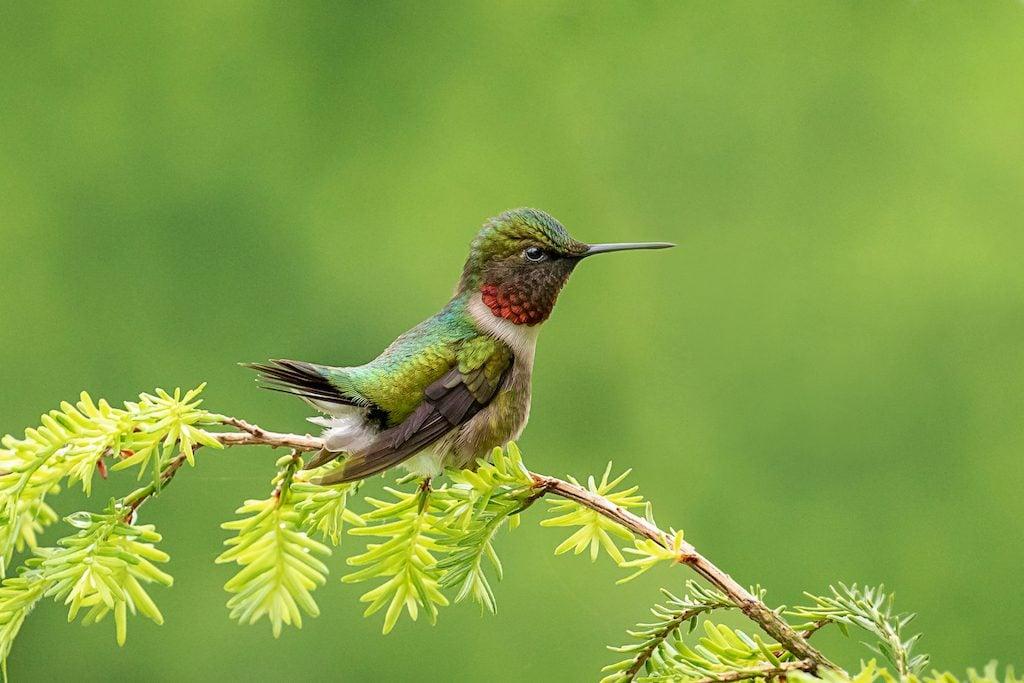 Close up photo of a hummingbird