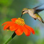 Top 10 Heat-Tolerant Plants