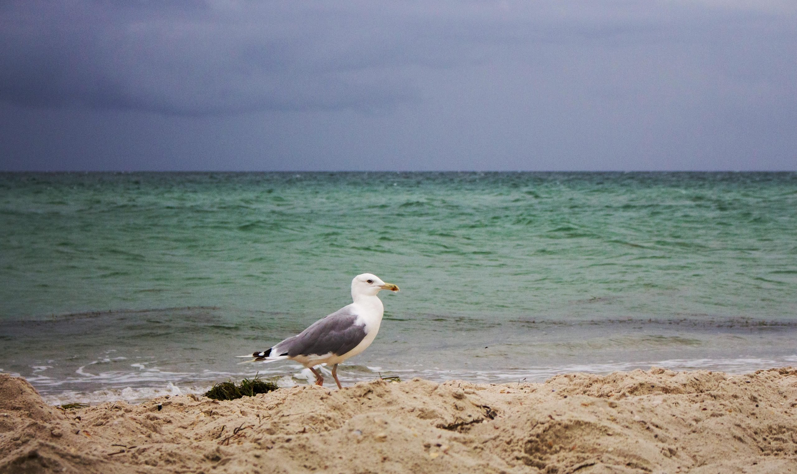 seagull on beach