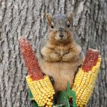 What to Feed Squirrels (and How to Peacefully Co-Exist)