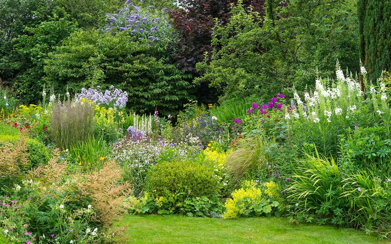 Mixed border in an English cottage garden. Abundant planting of shrubs, perennials and annuals.