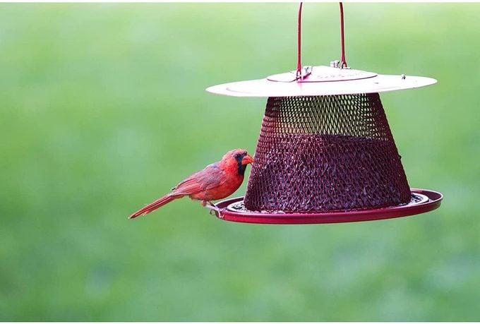 red cardinal feeder